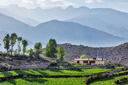 himachal pradesh: Nako village in Himalayas, Himachal Pradesh, India