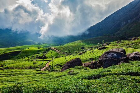 tea plantations: Kerala India travel background - green tea plantations in Munnar with low clouds, Kerala, India - tourist attraction