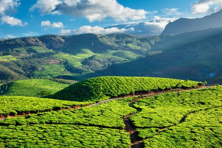 munnar: Kerala India travel background - green tea plantations in Munnar with low clouds, Kerala, India - tourist attraction