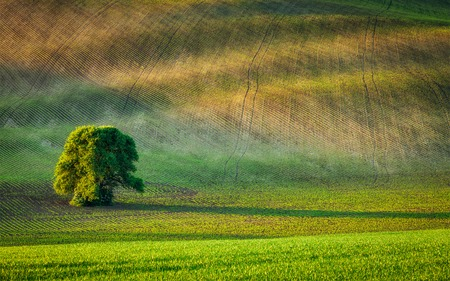 the ploughed field: Lonely tree in ploughed field, Moravia, Czech Republic Stock Photo