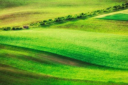 Paysage vallonné de champs verts en Moravie du Sud, République tchèque