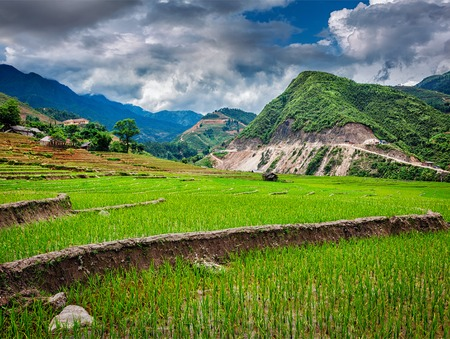 sapa: Rice field terraces (rice paddy). Near Cat Cat village, near Sapa, Vietnam Stock Photo