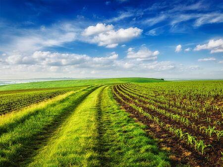 czech republic: Rolling fields of Moravia, Czech Republic Stock Photo