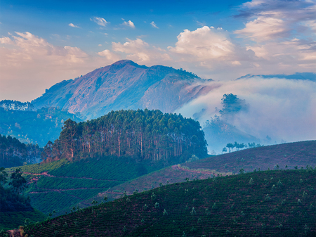 valley view: Kerala India travel background - tea plantations on sunrise in Munnar, Kerala, India