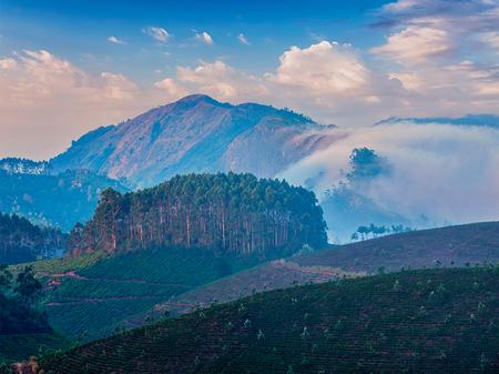 tea plantations: Kerala India travel background - tea plantations on sunrise in Munnar, Kerala, India