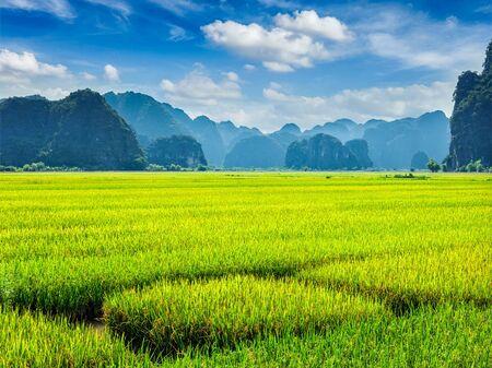 tam: Green rice field and carst mounains. Tam Coc, Vietnam
