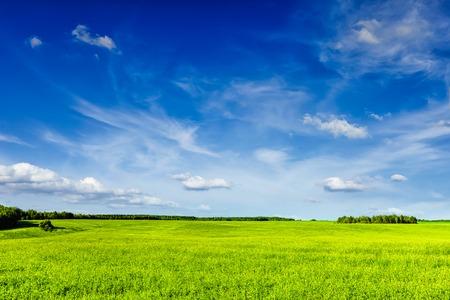 Fondo de primavera verano - campo de hierba verde paisaje paisaje de pradera con cielo azul Foto de archivo
