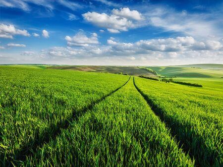 green fields: Green fields of Moravia, Czech Republic