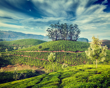 vintage travel: Kerala India travel background - vintage retro effect filtered hipster style image of green tea plantations in Munnar, Kerala, India - tourist attraction