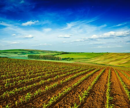 moravia: Rolling fields of Moravia, Czech Republic Stock Photo