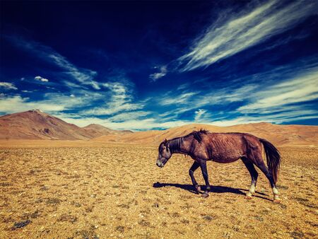 plains indian: Vintage retro effect filtered hipster style image of horse in Himalayas. Ladakh, India