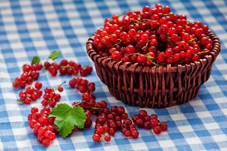 redcurrant: Redcurrant red currant berries  in wicker bowl on kitchen table