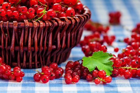 red currant: Redcurrant red currant berries  in wicker bowl on kitchen table
