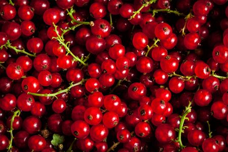 redcurrant: Redcurrant or red currant berries close up texture background Stock Photo
