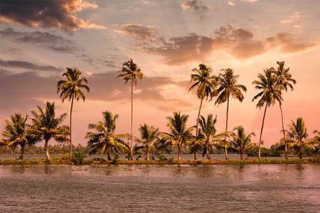 backwaters: Kerala travel tourism background - Palms at Kerala backwaters. Allepey, Kerala, India on sunset. This is very typical image of backwaters. Stock Photo