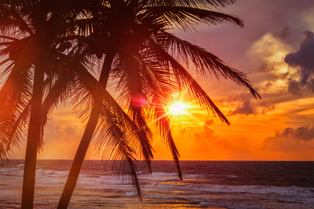 beach sunset: Beach resort vacation holidays background - tropical ocean sunset scene with palms. Copyspace