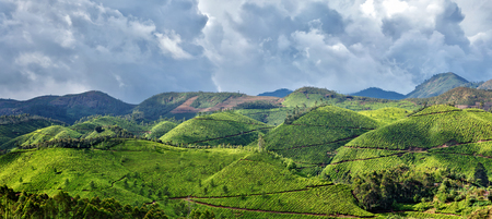 tea plantations: Kerala India travel background - panorama green tea plantations in Munnar with low clouds, Kerala, India - tourist attraction Stock Photo