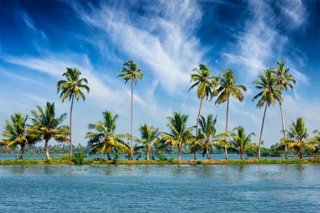 backwaters: Kerala travel tourism background - Palms at Kerala backwaters. Allepey, Kerala, India. This is very typical image of backwaters.