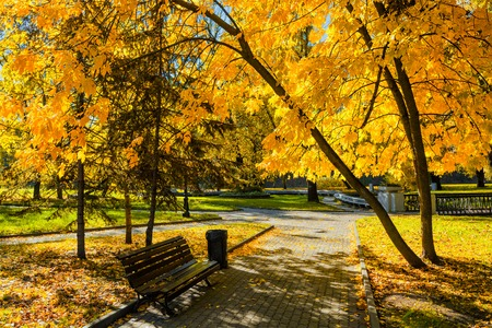 yellow trees: Autumn  colors - fall in park with yellow leaves foliage trees Stock Photo