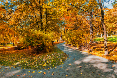 yellow trees: Autumn colors - fall in park with yellow leaves foliage trees