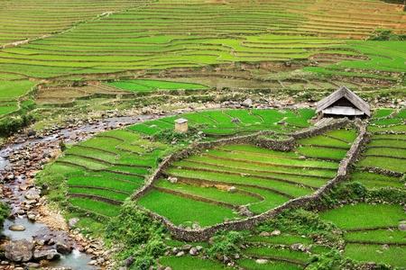 sapa: Farm shed in rice field terraces. Near Sapa, Vietnam