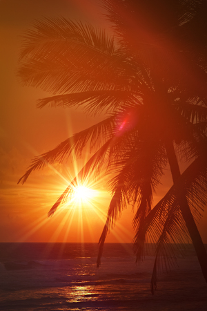 eventide: Beach resort vacation holidays background - tropical ocean sunset scene with palms. Copyspace