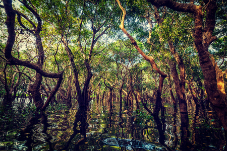 Vintage retro effect filtered hipster style image of flooded trees in mangrove rain forest. Kampong Phluk village. Cambodia