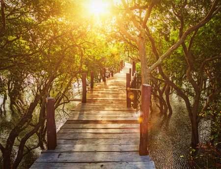 traveled: Tropical exotic travel concept - wooden bridge in flooded rain forest jungle of mangrove trees near Kampong Phluk village, Cambodia. With lens flare