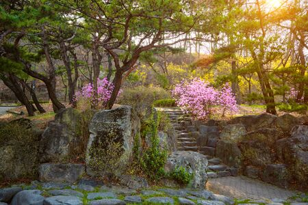 Park in Asia on sunset Foto de archivo - 140908372