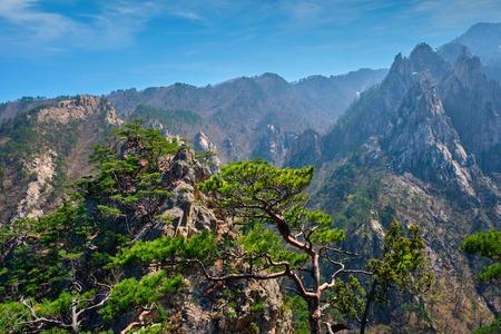 Pine tree and rock cliff , Seoraksan National Park, South Korea Stock Photo
