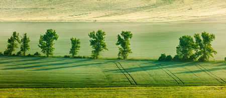 Moravian rolling landscape with trees in early morning panorama