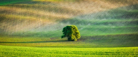 Panorama of lonely tree in ploughed field Reklamní fotografie