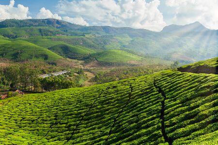 Plantaciones de té en India