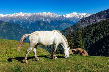 Horses in mountains. Himachal Pradesh, India 스톡 콘텐츠
