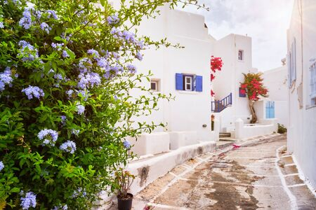 Picturesque narrow street with traditional whitewashed houses with blooming bougainvillea flowers of Naousa town in famous tourist attraction Paros island, Greece 版權商用圖片
