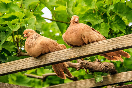 doublet: Doves sitting on a stick clear day