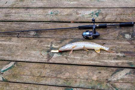 predatory: caught predatory fish lies on the shore