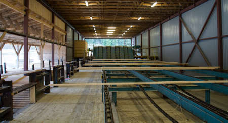 line: Cut wood planks are moving on conveyor to be stacked in sawmill.