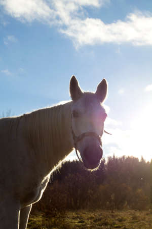 Portrait of a white horse. It is well-lit with sun.