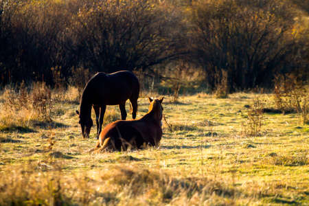 light brown horse: Silhouettes of two horses in pasture. One of them is eating grass, second is resting nearby.