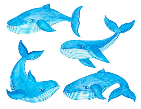 mammal: Watercolor seamless pattern with blue whale in cartoon style. Sea mammal. Nautical design.