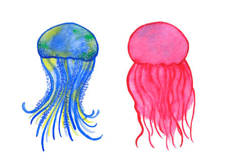 oceanography: Watercolor jellyfish set isolated on white background. Sea and ocean symbol. Perfect for t-shirt design, invitation, wedding card Stock Photo