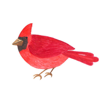 Hand drawn watercolor cute red bird isolated on a white background. Fauna symbol. Perfect for wedding, holidays, invitation, birthday