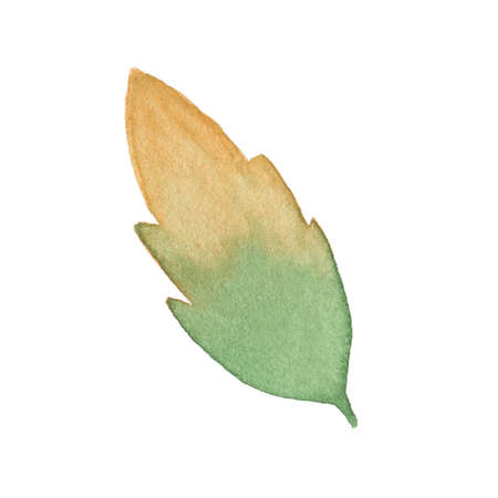 lush foliage: Watercolor autumn leaf isolated on white background. Perfect for wedding, holidays, invitation, birthday