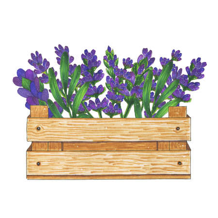 fragrant bouquet: Wooden box with flowers bouquet of lavender marker illustration. Flora and plants Stock Photo