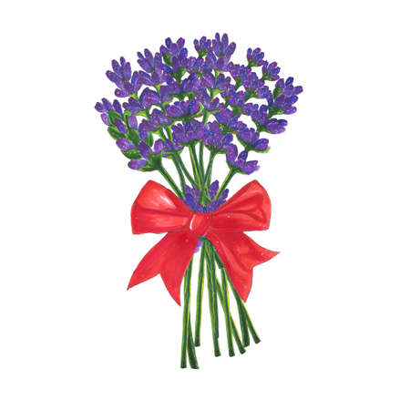 Flowers bouquet of lavender with red bow marker illustration. Flora and plants
