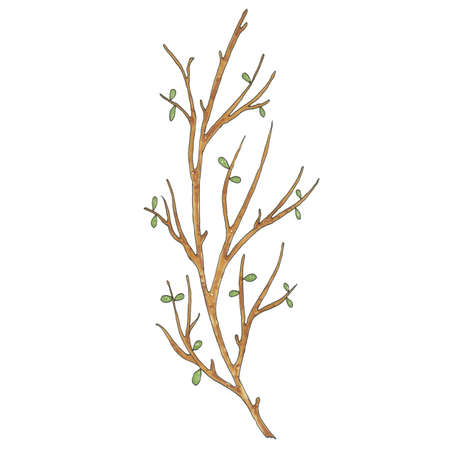 Hand painted with markers brown tree branch. Botanical illustration isolated Stock Photo