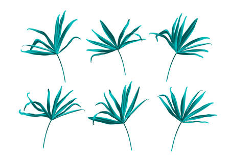 Tropical fan palm green jungle leaf isolated on white background. Botanical elegant decorative floral vector illustration in trendy realistic cartoon style