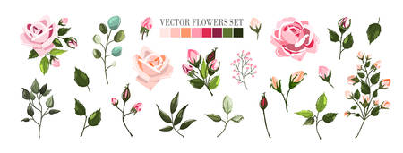 Set of pale pink rose flowers and green leaves. Floral bouquets, branch, arrangements for wedding invitation save the date or greeting card design. Vector illustration in watercolor style Иллюстрация
