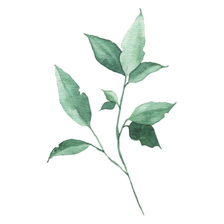 Watercolor greenery floral leaf plant forest herb spring flora isolated on white background. Botanical decorative illustration for wedding invitation card